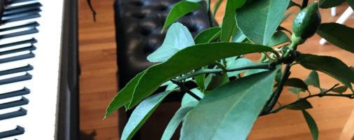 Green Star Formula